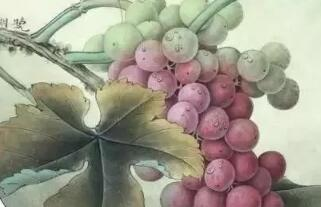 工笔画葡萄水珠画法,染色步骤图解