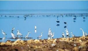鄱阳湖迎来首批越冬国家一级保护动物白鹤
