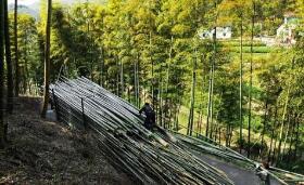 绿色长宁:奋力打造国际竹生态文化旅游目的地