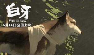 电影《白牙》曝月光版海报 6月14日暖化暑期档